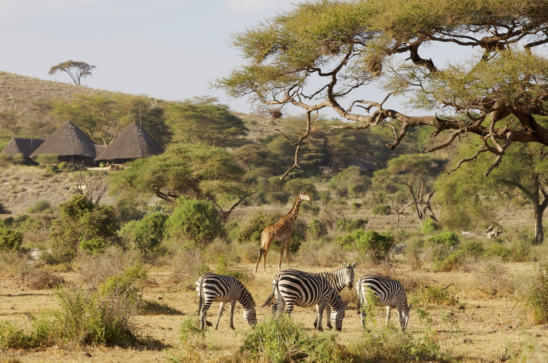 Amboseli 3 Days 2 Nights Weekend Safari