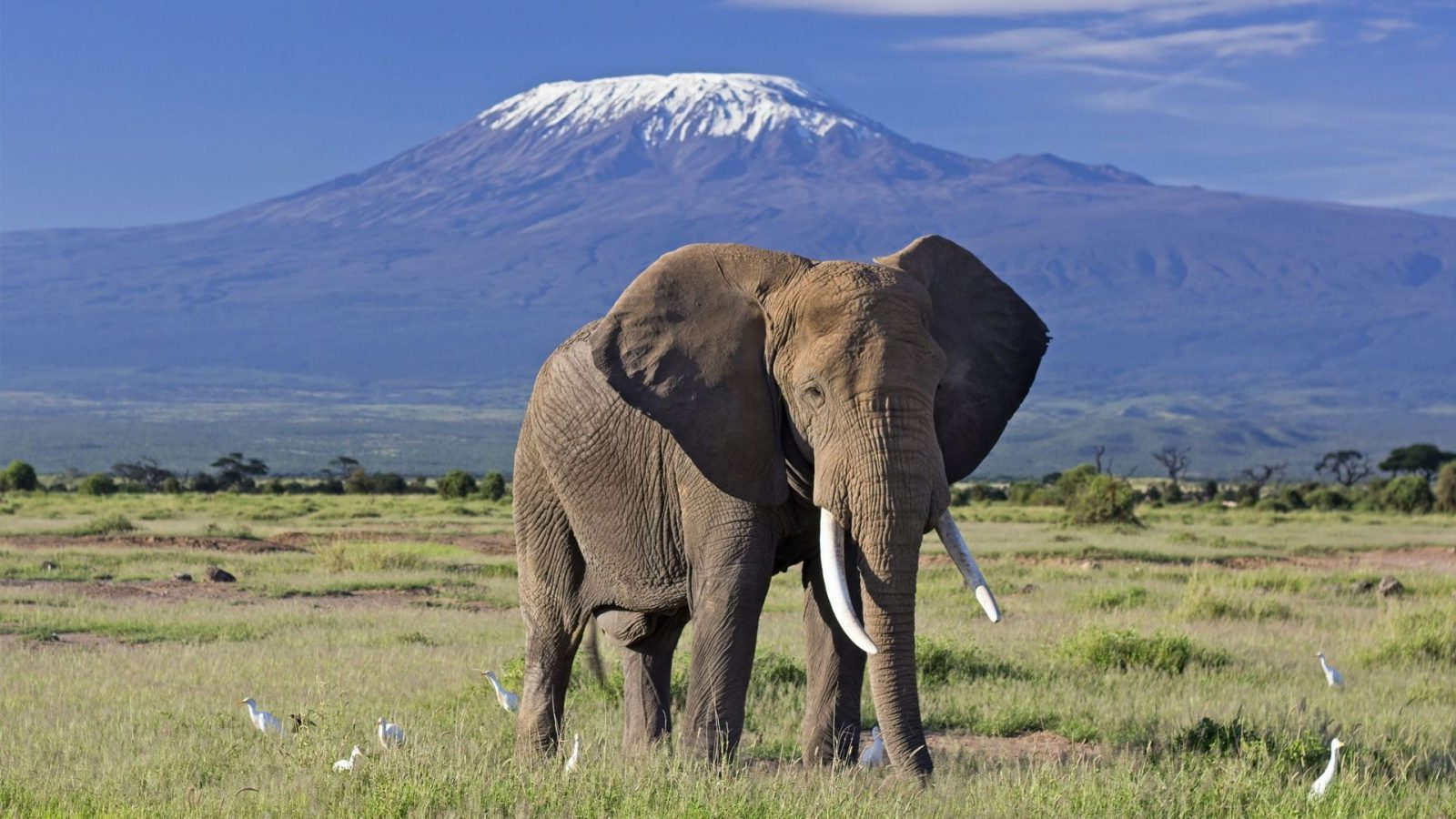 3 Days Amboseli Luxury Safari Adventure