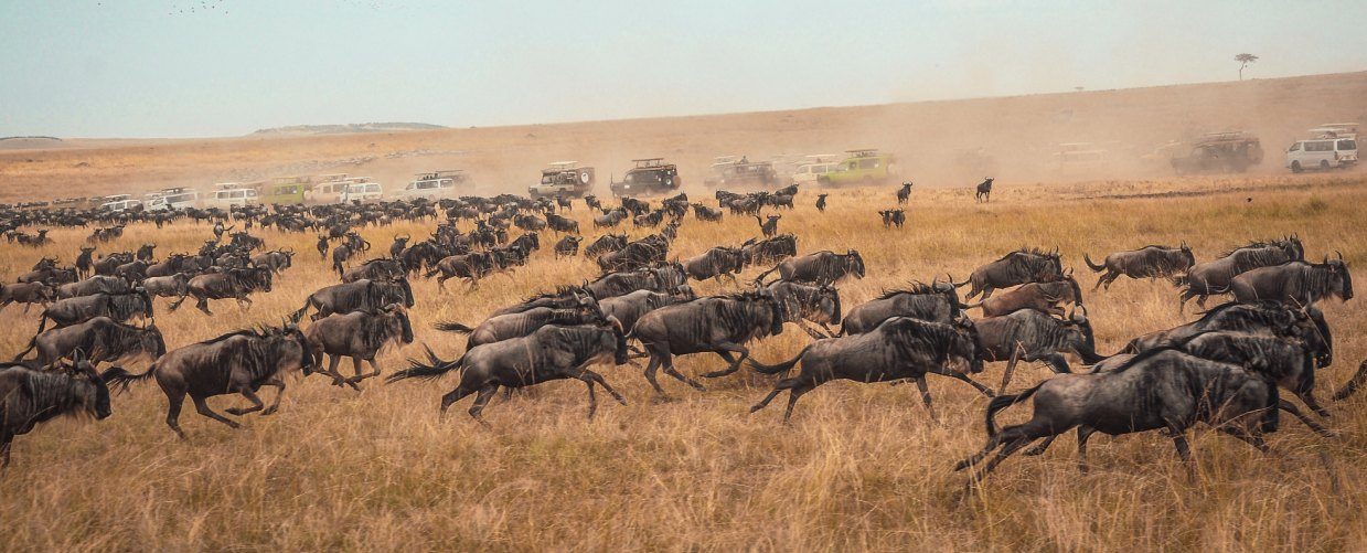 3 Days 2 Nights Masai Mara Weekend Packages