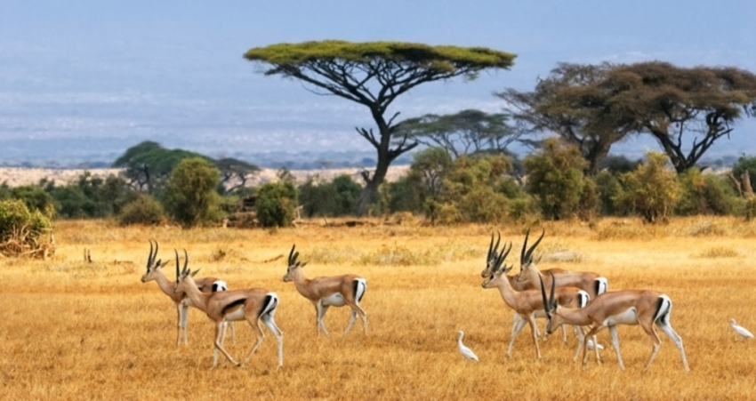 3 Days Amboseli Jamhuri Safari Packages