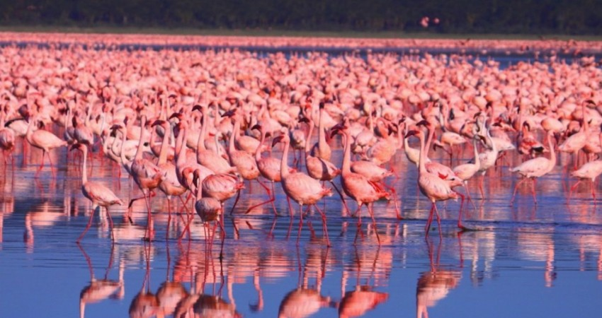 3 Days, 2 Nights Jamhuri Packages to Lake Nakuru