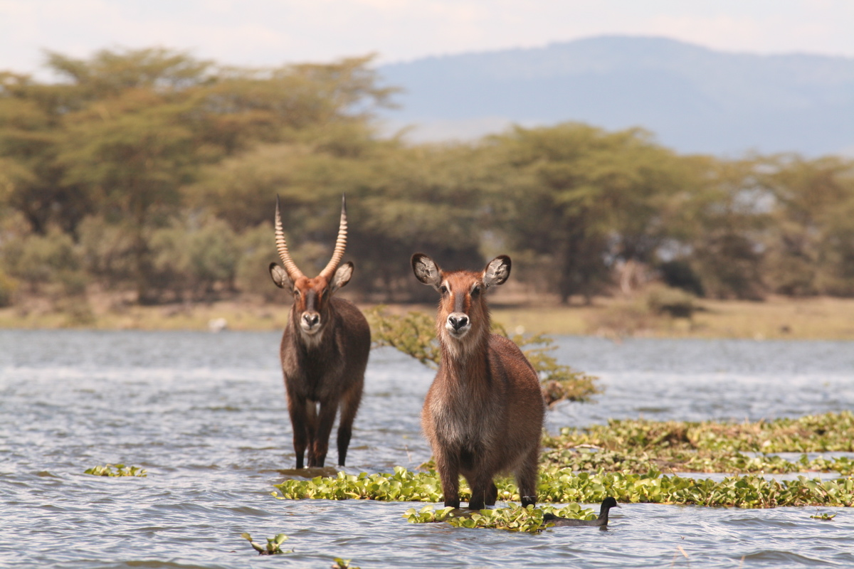 Naivasha Mashujaa Weekend Getaways
