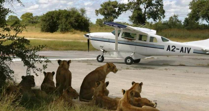 3 Days, 2 Nights Masai Mara Flying Safari