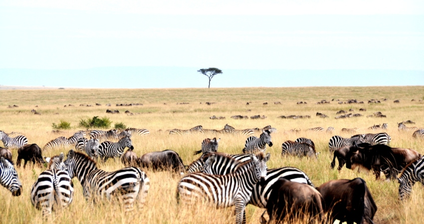 3 Days Masai Mara Christmas Packages