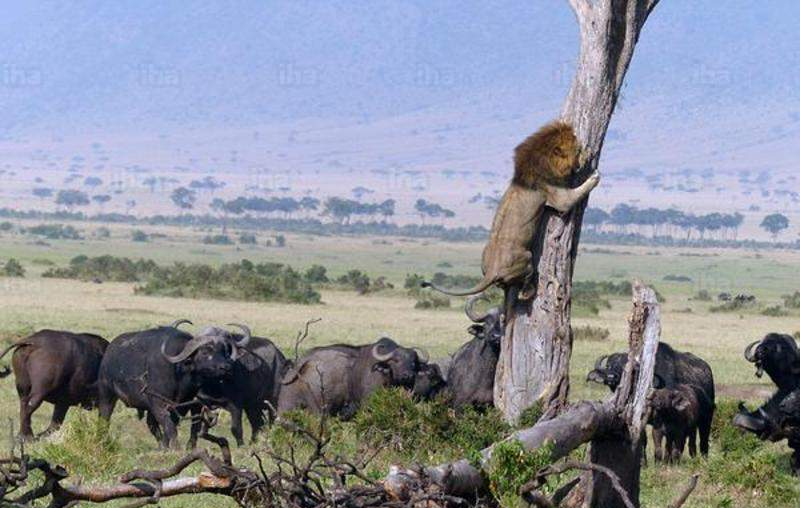 3 Days, 2 Nights Masai Mara Christmas Packages
