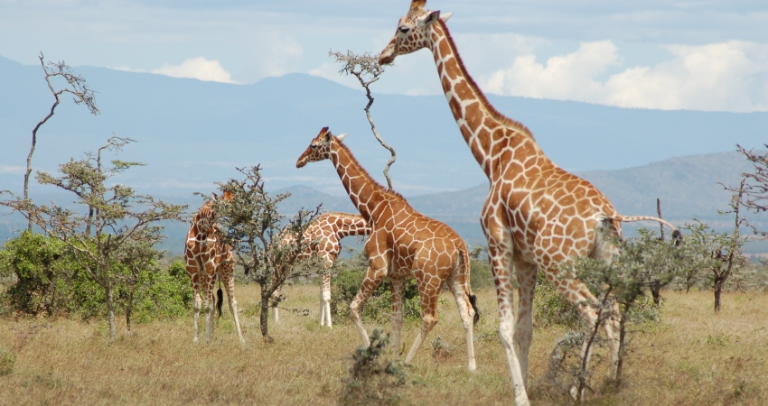 3 Days 2 nights Samburu Christmas Safari Packages