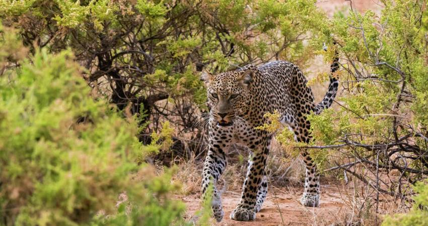 3 Days, 2 Nights Samburu Mashujaa Safari Packages