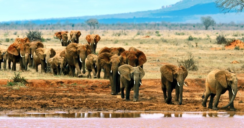 3 Days Tsavo Madaraka Day Safari Packages