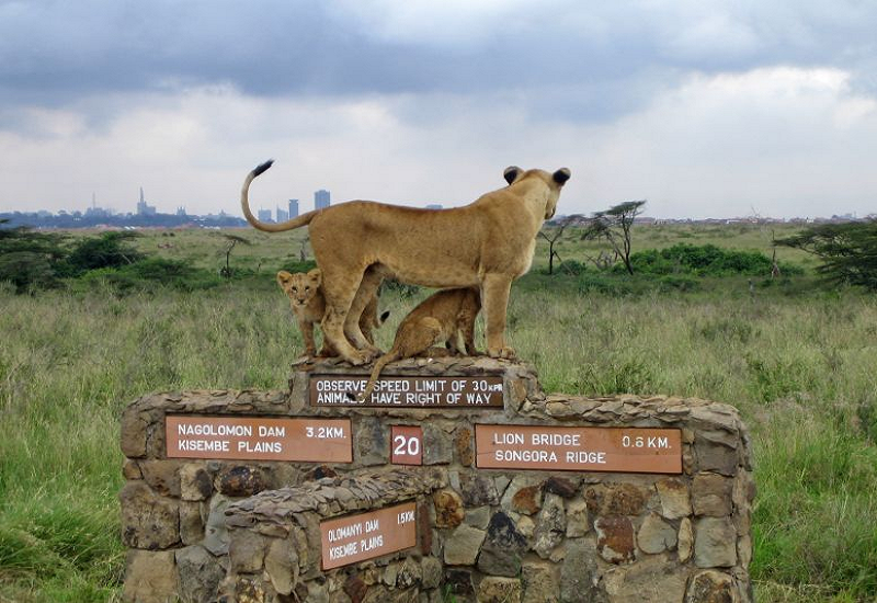 Nairobi National Park | David Sheldrick & Giraffe Centre Excursions