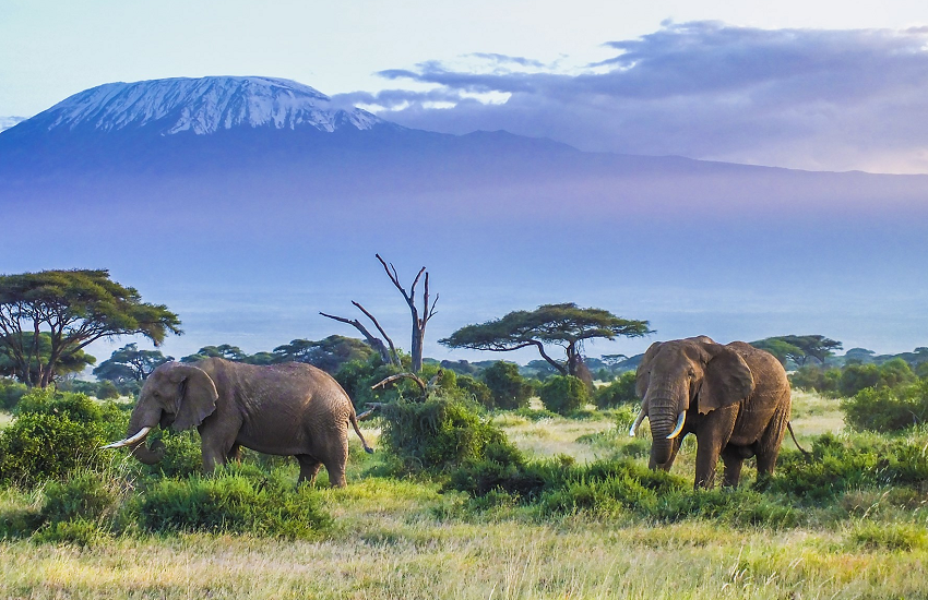 4 Days Amboseli Christmas Safari Packages